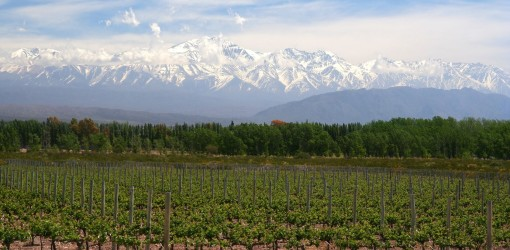 Mendoza Vineyard Argentina Small