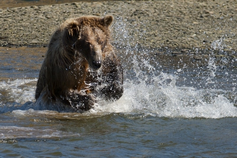 Crystal Creek Lodge Bear Viewing