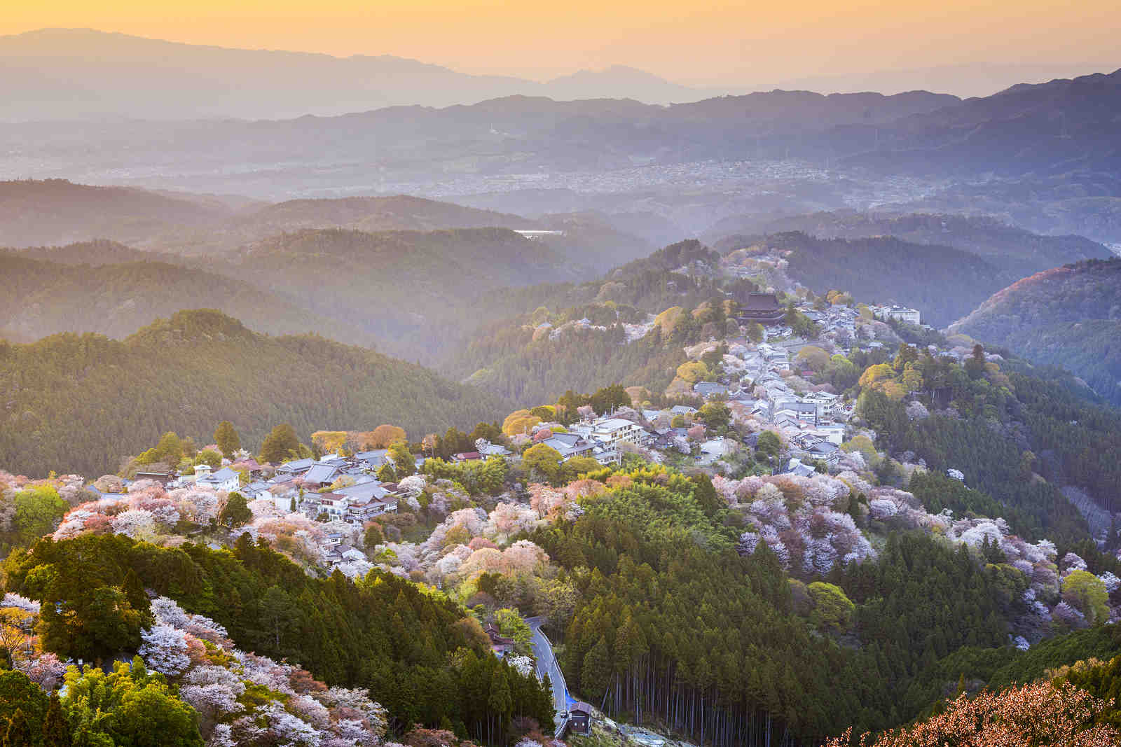 View of Town and Cherry Trees in Spring, Yoshinoyama, Nara, Japan